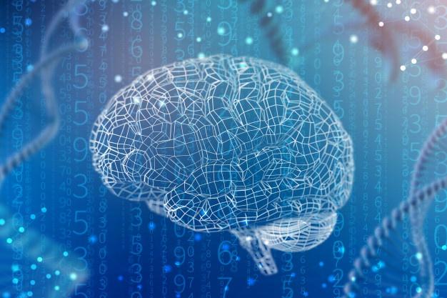 NEUROFISIOLOGIA: Como compreender a estrutura do sistema nervoso e divisões do cérebro.
